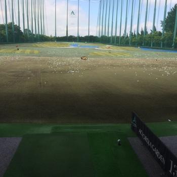 golfjund.JPG