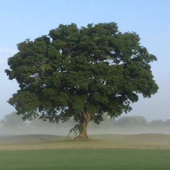 golfmayf.JPG
